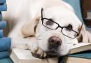Los madrileños podrán llevar perros en el Metro en horas valle y sin limitaciones en fines de semana